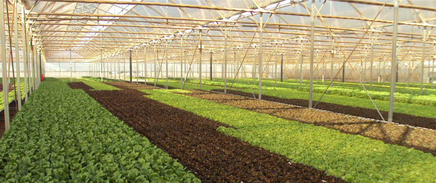 rnkey Greenhouse System Suppliers South africa